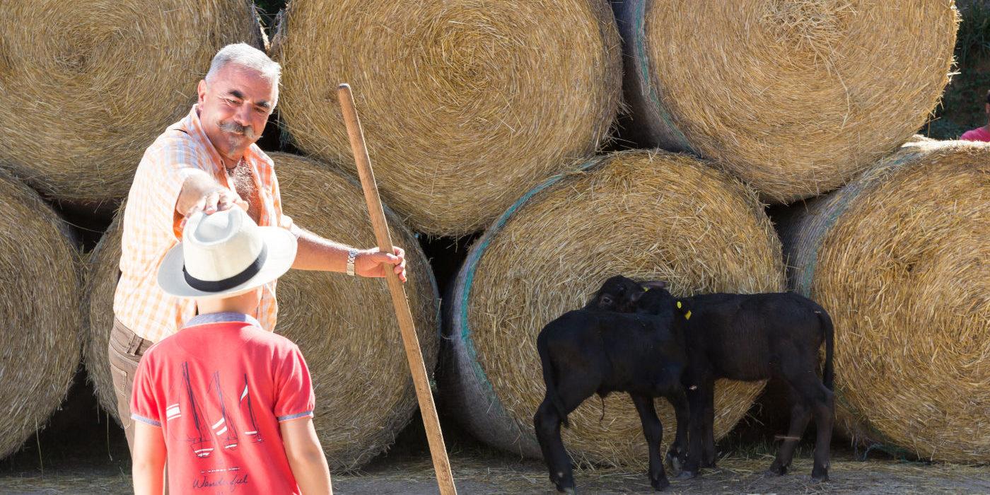 allevamento daniele bufale